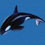 Dibujo en impresión digital Orca en Mosaico - Ezarri